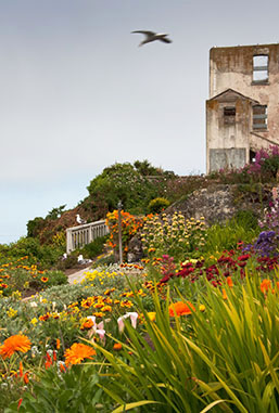 Award winning gardens on Alcatraz